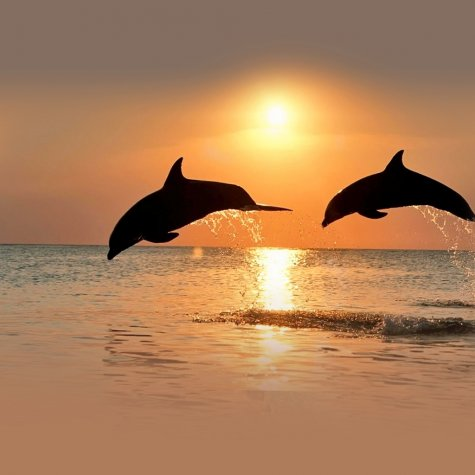 Sunset & Dolphins